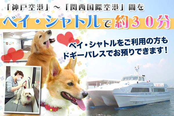 神戸空港〜関西国際空港間約30分のベイ・シャトルをご利用の際もドギーパレス神戸空港店をご利用できます!